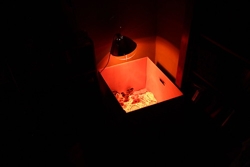 Chicken night light.