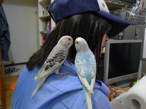 小P 與 Nico 停在妹妹的肩膀上