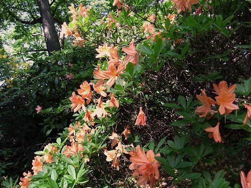 Trädgård 467