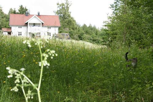 20110612_snekkerhagentigeren by michael vester