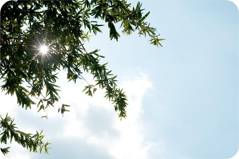 Sun Starburst
