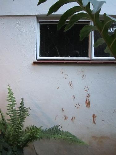 Kenyan Mud