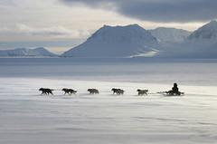 Собачьи упряжки из Чаплина, отбор (25) (Магадан) Tags: anadyr chukotka анадырь чукотка чукчи луораветланы luoravetlan