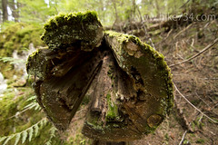 "Log End • <a style=""font-size:0.8em;"" href=""http://www.flickr.com/photos/63501323@N07/5883218609/"" target=""_blank"">View on Flickr</a>"