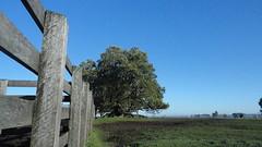 Umbu de mangueira (G.F Ilha) Tags: sun tree field brasil cow bonito paisagem bull campo arvore hereford inverno cavalo riograndedosul amanhecer tropa vaca riogrande mangueira gacho caapava junho peo braford crioulo umbu sogabriel soulth campeiro campeirismo