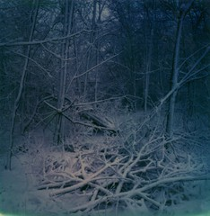 (WorthingtonJ) Tags: snow nature polaroid sx70 spring woods instantfilm impossibleproject
