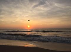 Morning Flight by Walter Sistrunk (AccessDNR) Tags: 2016 photocontest fall autumn scenery sceniclandscape sunrise assateague beach ocean