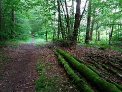 Wolfgang-Hanau Forest, Germany (asterisktom) Tags: rotelache wolfgang hanau forest wald limes roman 2016 trip2016kazakheuro july germany phone