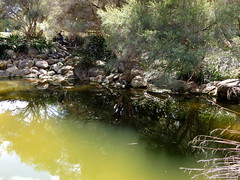 Shades (Lesley A Butler) Tags: australia kingspark wa wildflowers perth