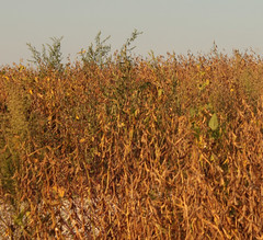 00099 (JennaCitrus) Tags: color art digital photography beans soybeans andtherewaslight