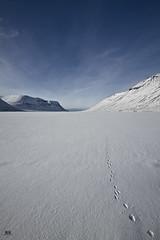 Spor  snjnum (Hlynur.Kr) Tags: snow mountains canon iceland 7d sland 1022 vestfirir snjr fjll nundarfjrur flateyri korpudalur