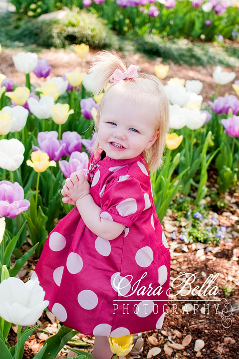3-17-2011 Charlotte Tulips (4) copyweb
