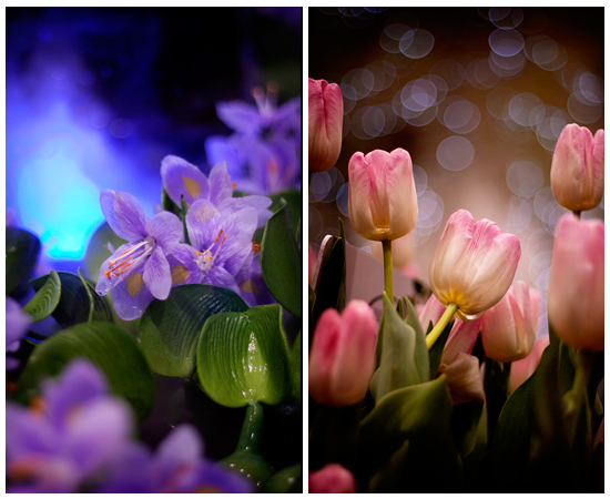 mystic_flowers