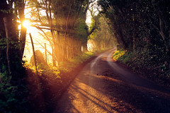 spring (andrew evans.) Tags: lighting morning trees light england sun mist nature misty fog fairytale sunrise landscape golden kent spring nikon shadows flare rays sunrays f28 d3 2470