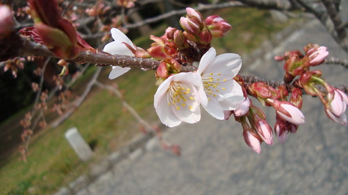 2011/04 京都御所 #03