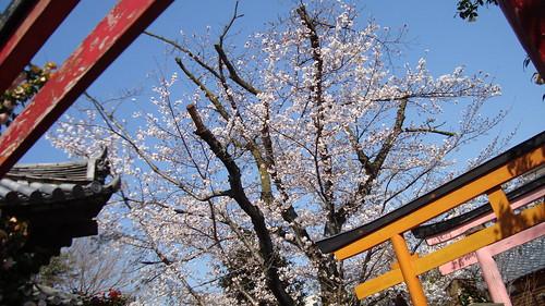 2011/04 千本釈迦堂 #03