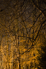 Early Spring Night (Truebritgal) Tags: longexposure trees nature night evening early spring woods nikon long exposure shot bare branches nighttime wooded d7000 truebritgal