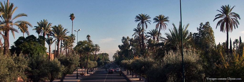 La végétation est luxuriante, aux portes du Sahara