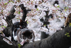 Cats on the tree in Ueno Park