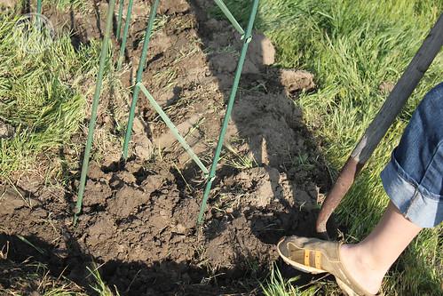 digging digging digging