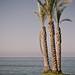 #15 Palm Tree
