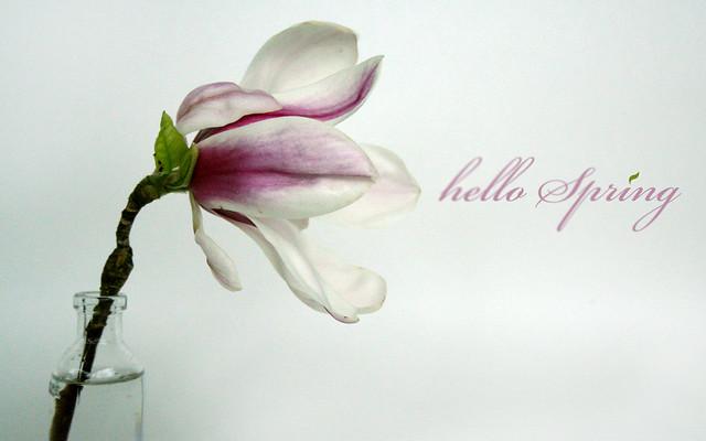 Hello Spring! 1680x1050