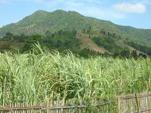 Panay-Roxas-Estancia-Iloilo (43)