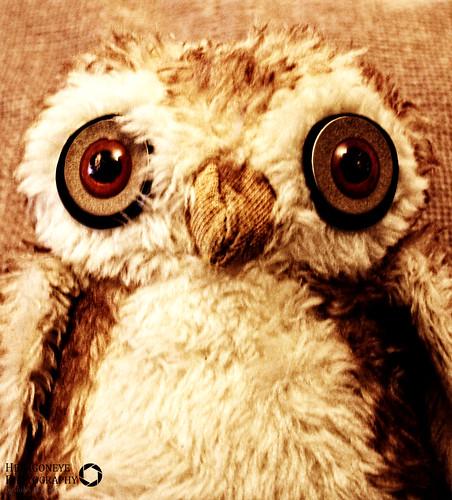 105/365 Big Owl
