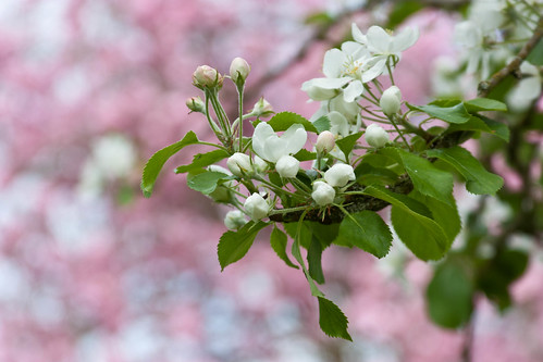 Week 15 - Blossom