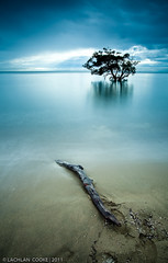 The Circle Of Life (Lockie Cooke) Tags: longexposure morning trees reflection beach water clouds canon bay sand tide smooth brisbane driftwood filter qld stick 1740mm nudgee nudgeebeach ndx400 5dmkii lockiecooke