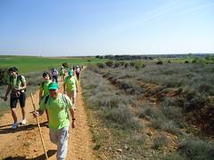 Ruta do Viño de Valdevimbre (León)