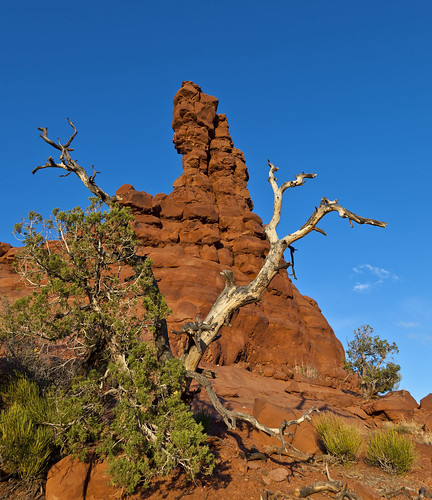 Chimney Rock & Tree