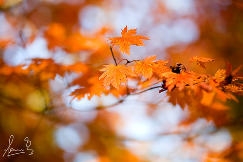 Autumn Colours Mt Wilson