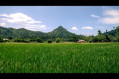 green Palawan (green.pit) Tags: travel green reisen nikon asia asien southeastasia sdostasien rice philippines dslr filipinas viajar palawan dx philippinen 2011 d7000 nikond7000 pitgreenwood
