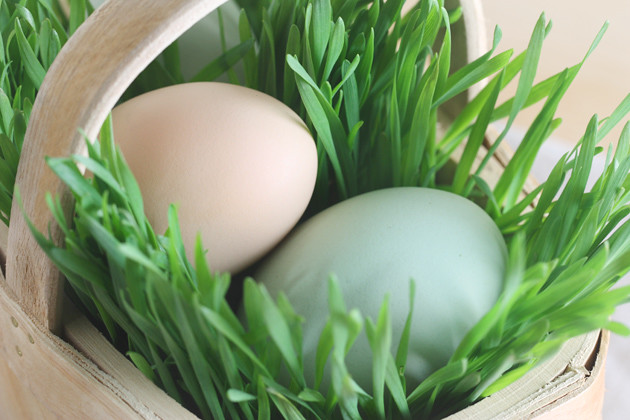 wheat-grass-easter-baskets-1