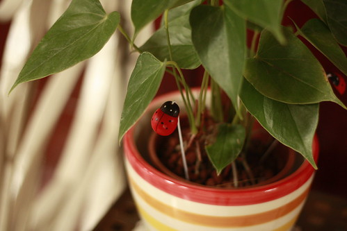 mom's plant with a fake ladybug