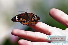 Beth Butterfly 2