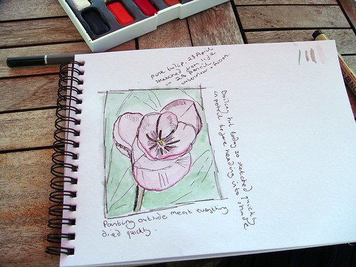Sketch of a tulip
