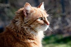 [フリー画像] 動物, 哺乳類, 猫・ネコ, 201104271700