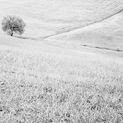 Val D'orcia, Tuscany (Massimo Margagnoni) Tags: world flowers trees blackandwhite bw italy white black flower art 6x6 nature digital canon landscape poetry solitude alone photographer digitale natura hasselblad val tuscany dreams 5d mystical foglia fiori minimalism toscana minimalismo viaggi nero paesaggio biancoenero massimo mkii mondo dorcia naturepoetry absoluteblackandwhite margagnoni