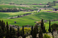 40 in a row (Dennis_F) Tags: italien trees italy green nature zeiss landscape spring italia sony country hill landwirtschaft natur row hills tuscany cypress grn agriculture fullframe dslr toscana valdorcia landschaft bume hilly cypresses frhling 135mm toskana hgel zypressen 13518 a850 hgelig sonyalpha sonydslr vollformat cz135 zeiss135 dslra850 sonya850 sonyalpha850 alpha850 tuscien sony135 sonycz135