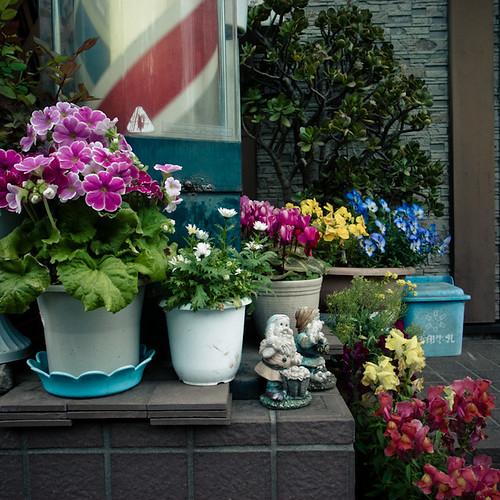 Barbershop Garden with Gnomes, Minami Kasai