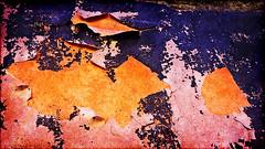 beautiful aging wall (marianna armata) Tags: old city urban canada color colour wall closeup concrete lumix quebec decay montreal grunge panasonic g1 aged aging marianna paing pealing armata macromondays mariannaarmata