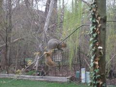 Squirrel feeder??