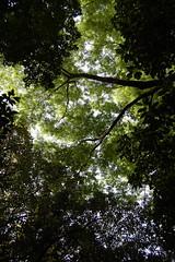 熱田神宮の森