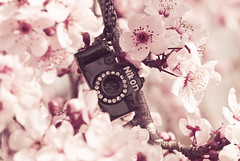 Unable are the loved to die.  For love is immortality.  ~Emily Dickinson (Simplymichelle) Tags: camera pink flowers flower cute necklace spring nikon blossoms tiny smally actionsandtexturesbymichellenicole