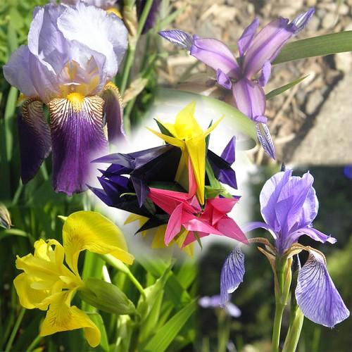 Defile Kusudama and Irises