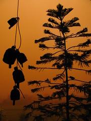 Dusty (Rahul Chhiber) Tags: tree bird dusty leaves bells canon haze powershot hazy duststorm silhoette jaipur flickraward sx120is