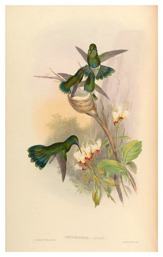 014-An introduction to the Trochilidae or family of humming-birds- Vol 4- 1861-John Gould