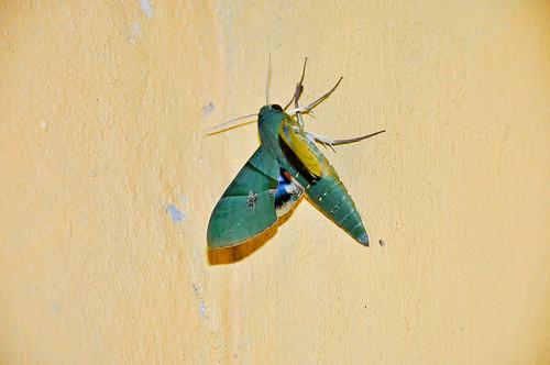 Mariposa verde (06)
